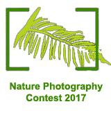 Concurso Internacional Fotografía